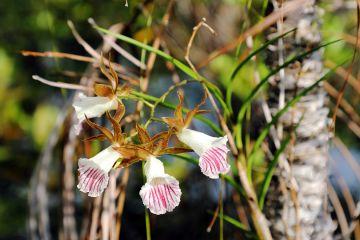 Exotische Flora im Regenwald