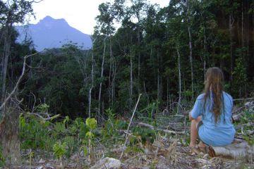 Das Ziel fest im Auge: Der Gipfel des Pico da Neblina