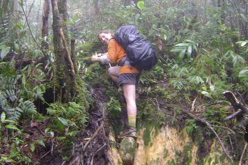 Aufstieg durch den Urwald