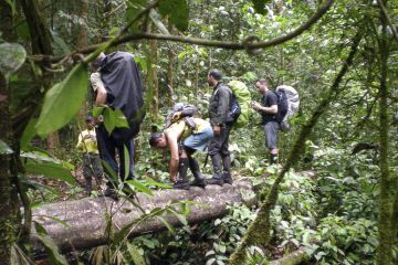 Auf dem Weg durch den Regenwald zum Monte Caburaí